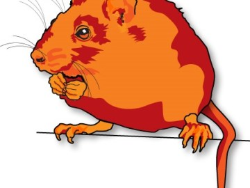 Simple Steps to Keep Rodents on the Move
