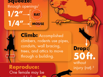 Infographic: Rodents